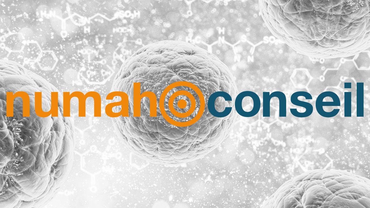 Content Marketing  Projet Numah Conseil